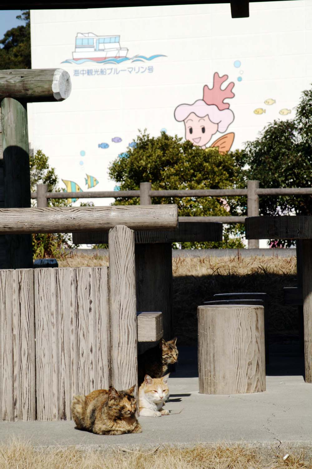 Takegashima_3